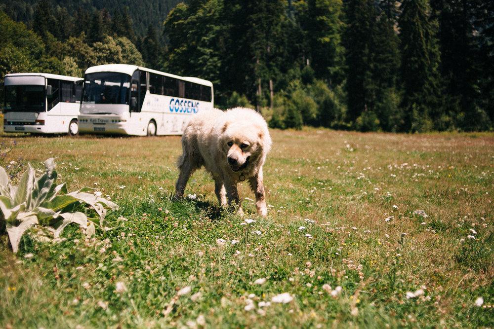 Bulgaria_0137.jpg