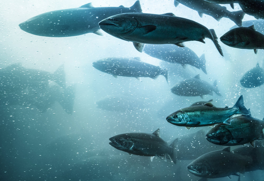 Enabling Sustainable Fish Production