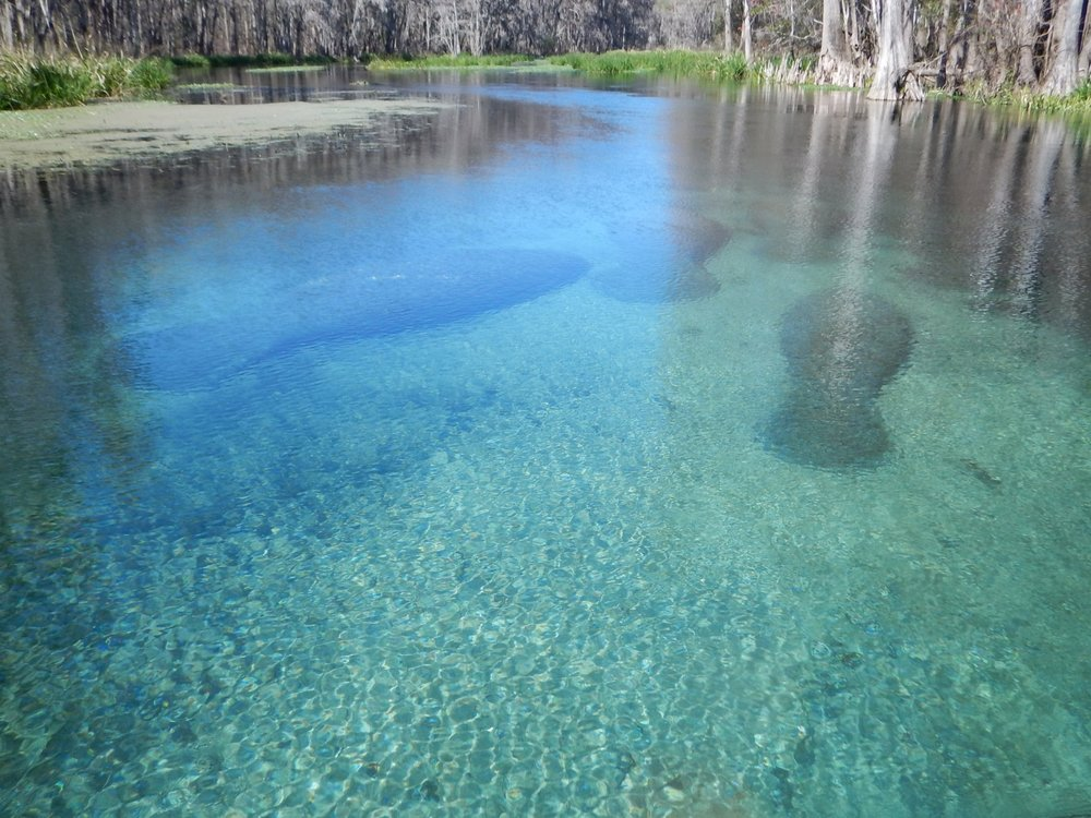Ichetucknee Springs is about 2 hours north of Tampa in a state park.  Perfect for enjoying wildlife surrounded by nature!  Due to high summer traffic, his trip is only offered in Fall through Winter months.