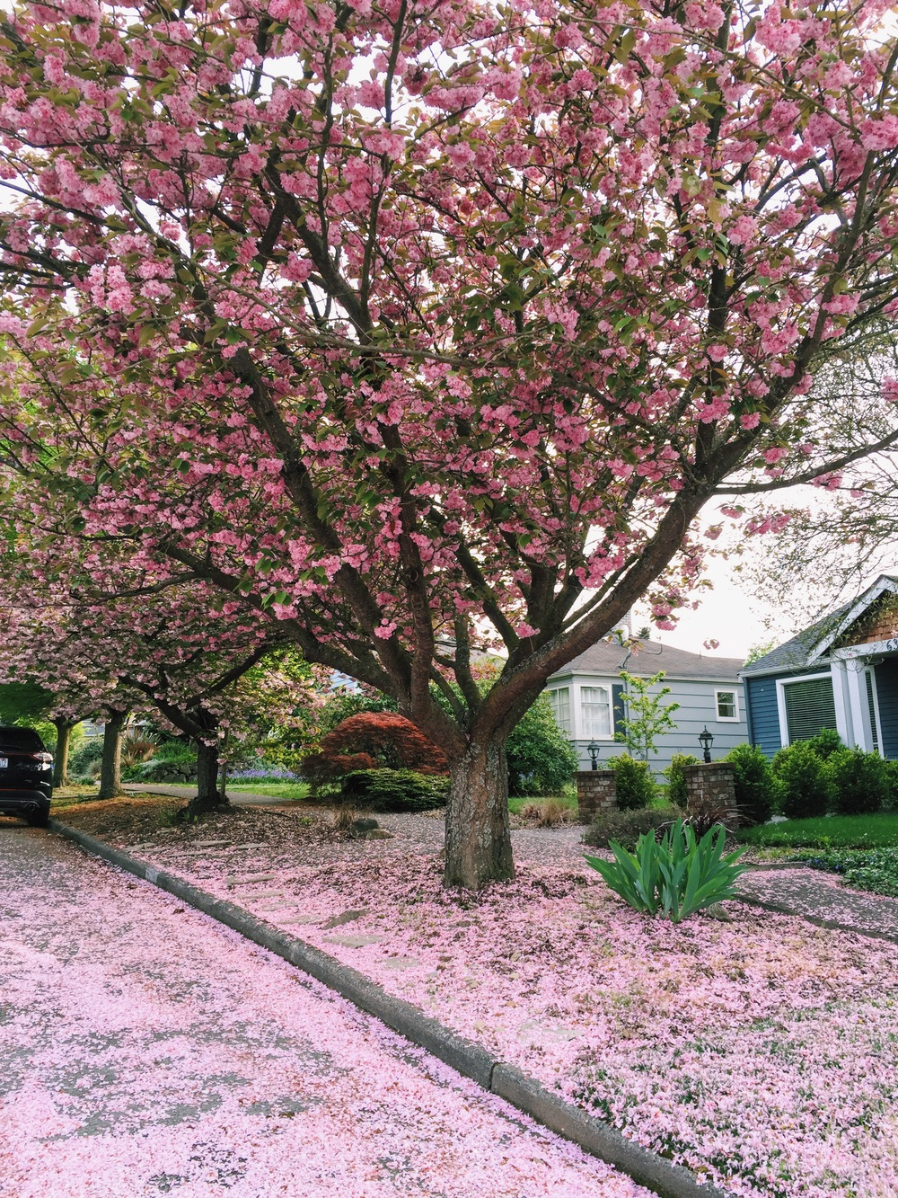 seattle spring-quinns place_7.JPG