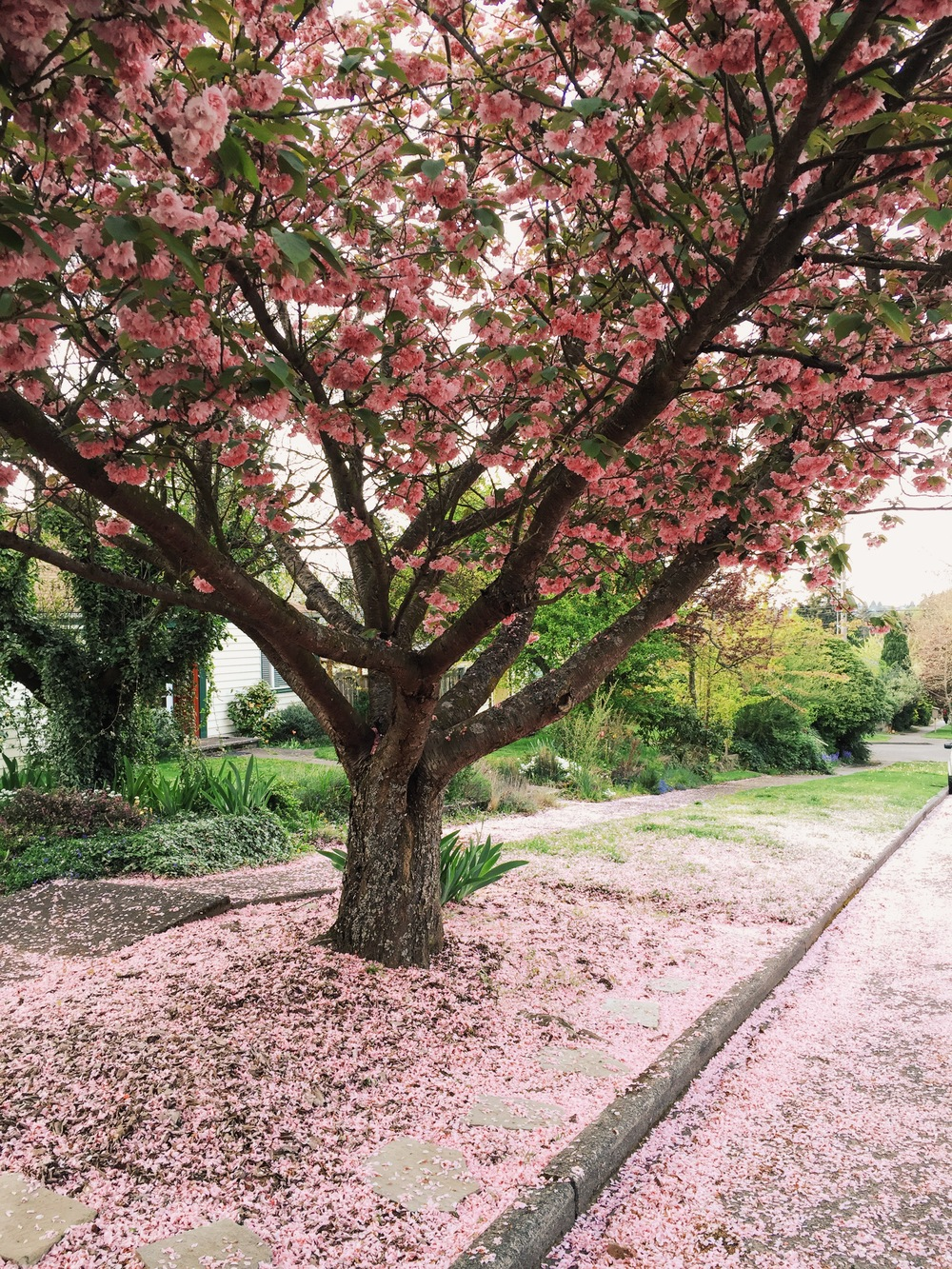 seattle spring-quinns place_9.JPG
