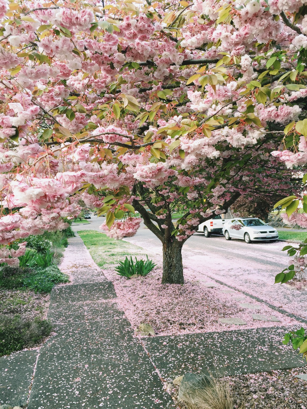 seattle spring-quinns place_11.JPG