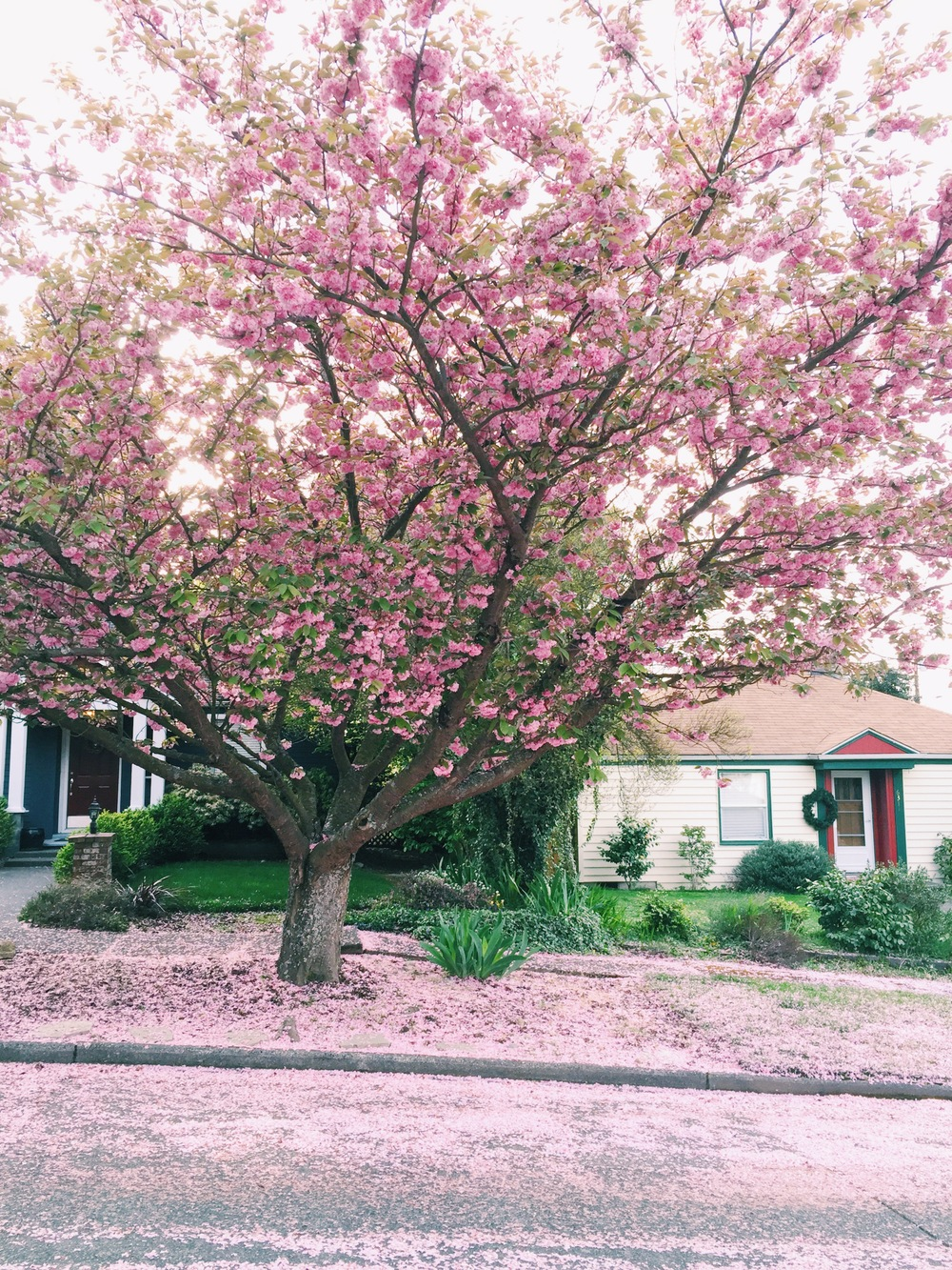 seattle spring-quinns place_23.JPG
