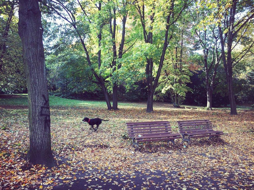 Berlin_Gesundbrunnen_Volkspark-Humbolthain-Park-2