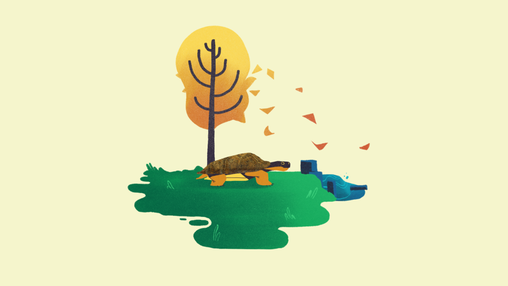 woodturtle_board51_illustration_v01.png
