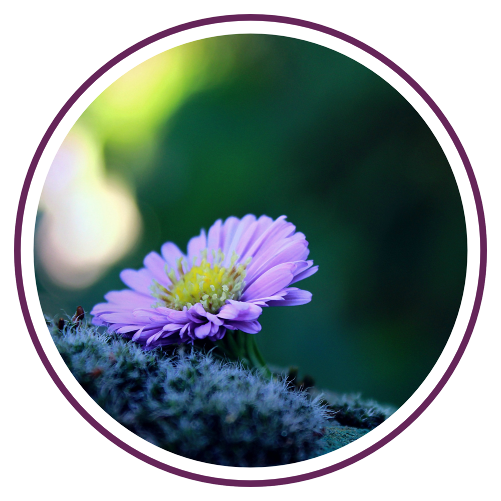 therapy-counseling-holistic-naperville
