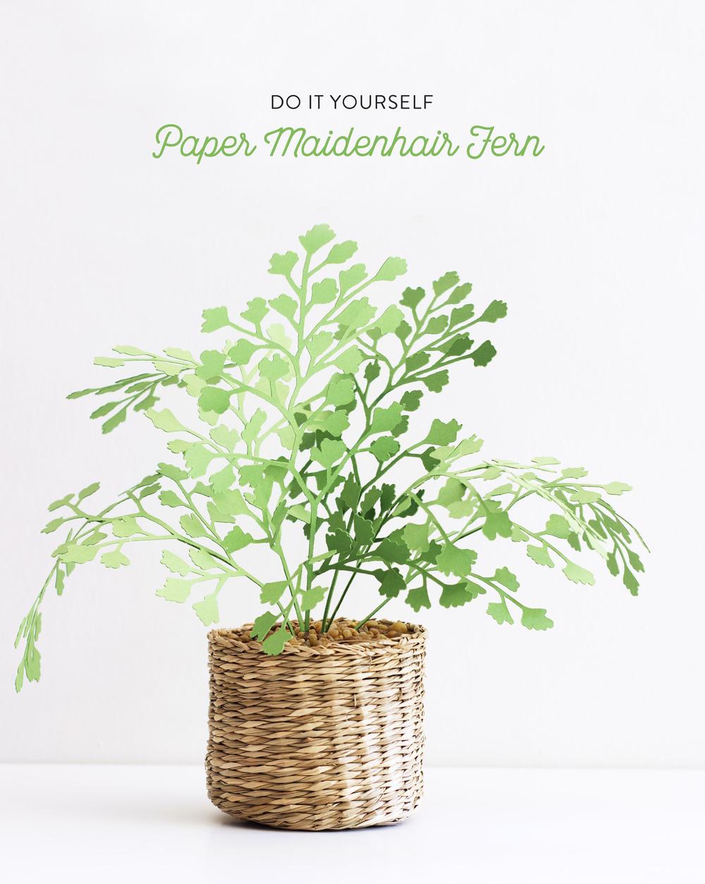 paper maidenhair fern plant the apple of my diy