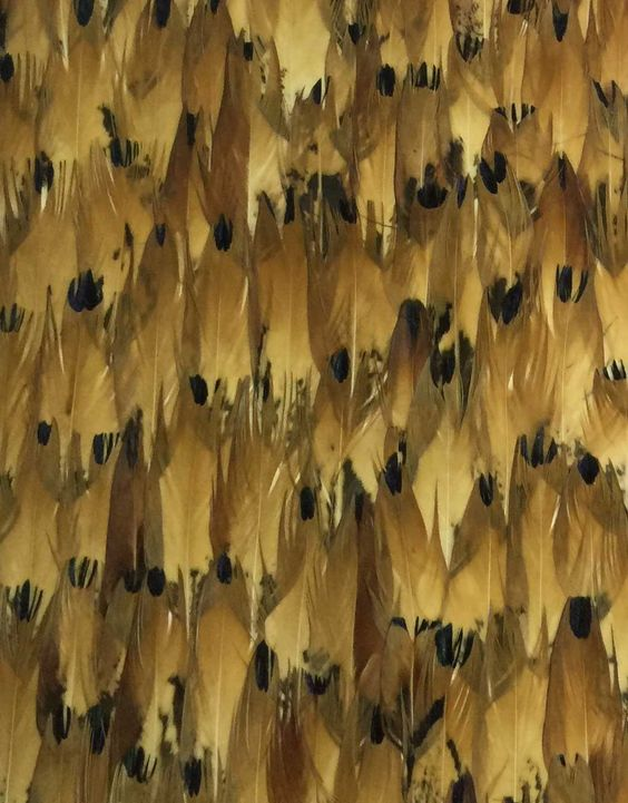 Meridian Abbey Interiors - Indianapolis Interior Designer - Real Feather Wallpaper