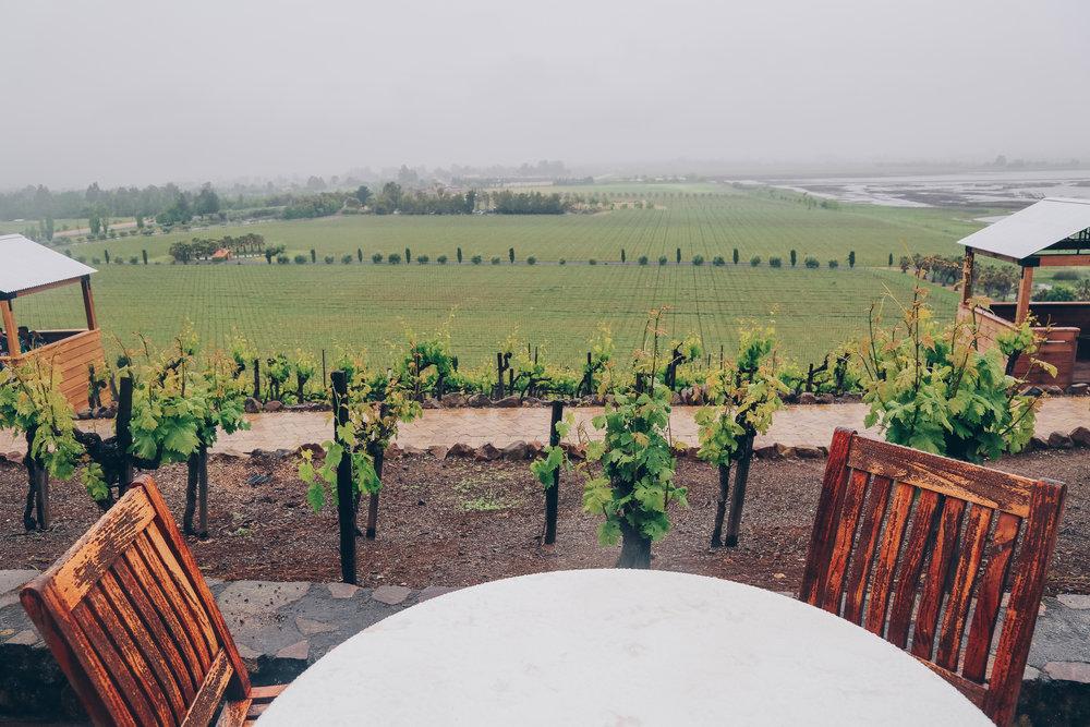 Viansa-Winery-9.jpg
