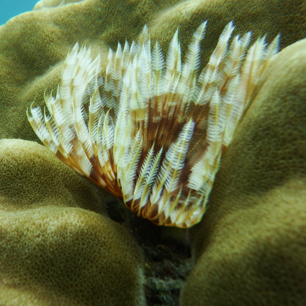 whensheroams_elnido_corals1.JPG