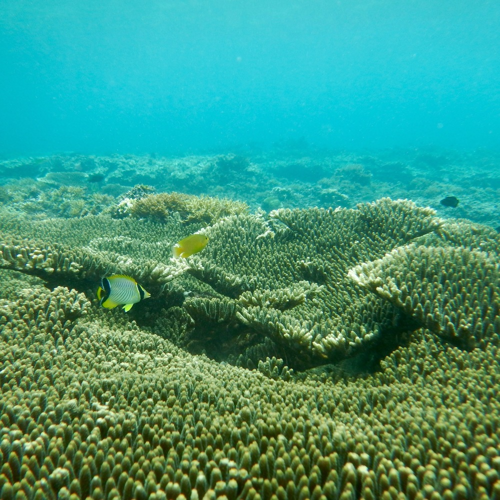 whensheroams_corals_elnidopalawan_travels.jpg