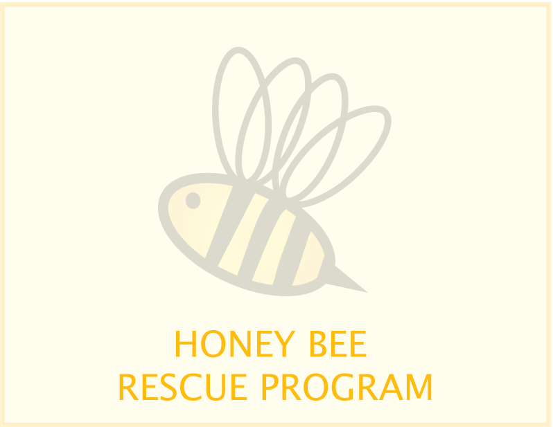 honey-bee-rescue-program.png