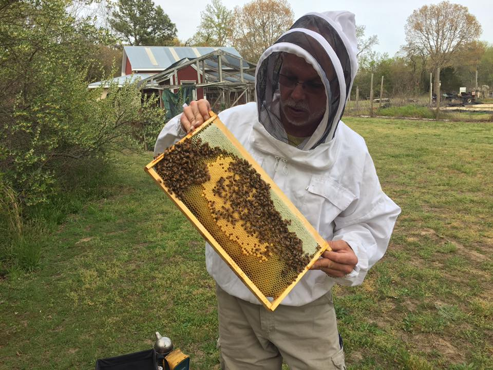 Gary G. Schempp checking out a successfully relocating hive as they are rebuilding their comb.