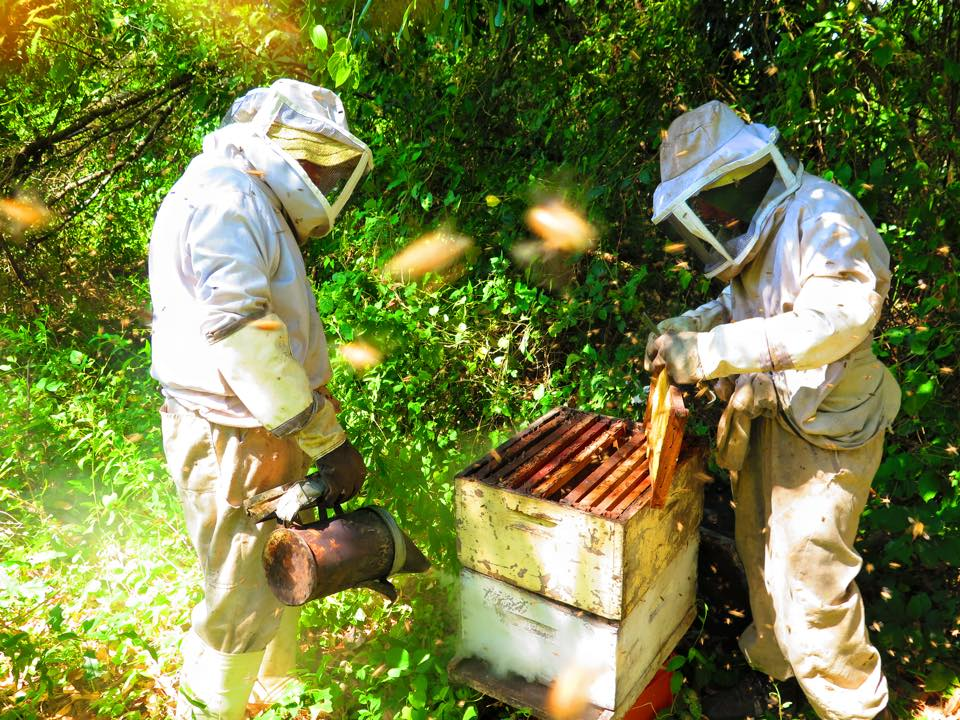 Beekeeping in the Nicaraguan jungle is a little bit different than on our family farm!