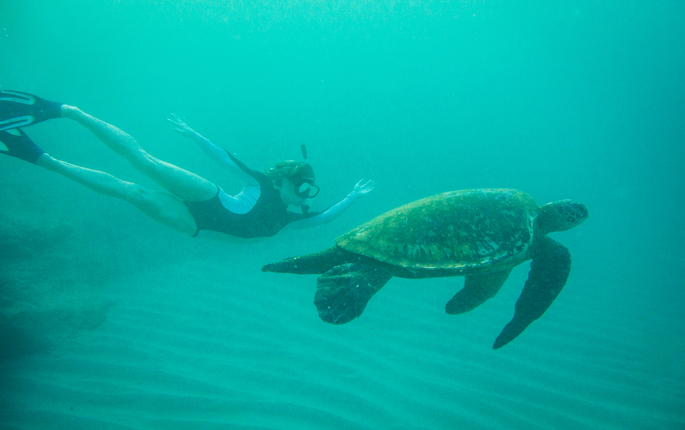 freediving-with-turtles-pueo-creations-photography-maui.jpg