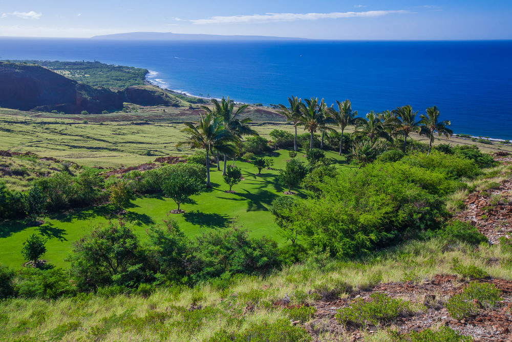 landscaped-oceanfront-maui-estate-chris-curtis-landscapes.jpg