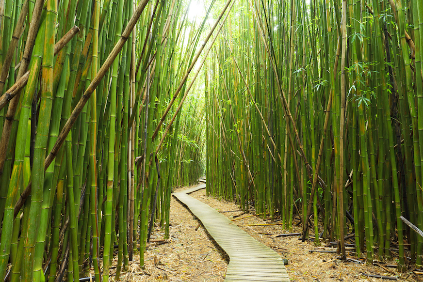 private-guided-hike-maui-tour-bamboo.jpg