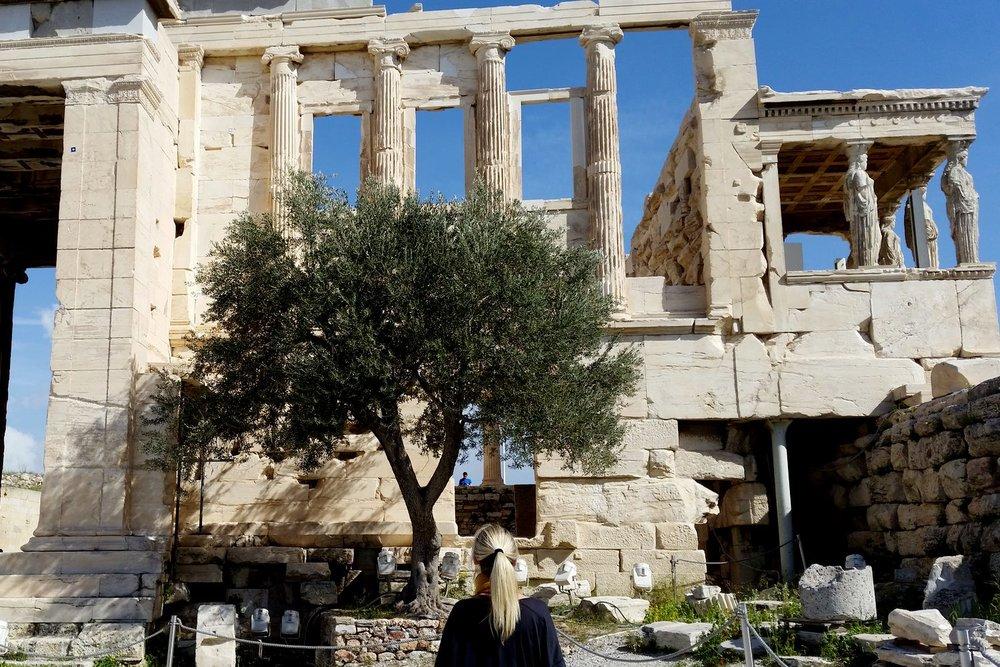 athens-acropolis-parthenon-olive-tree-character-32-globetotter-tavel