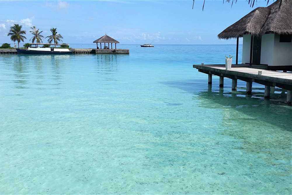 maldives-velassaru-view-from-spa-sting-ray-in-water-c32-character-32-globetrotter-travel