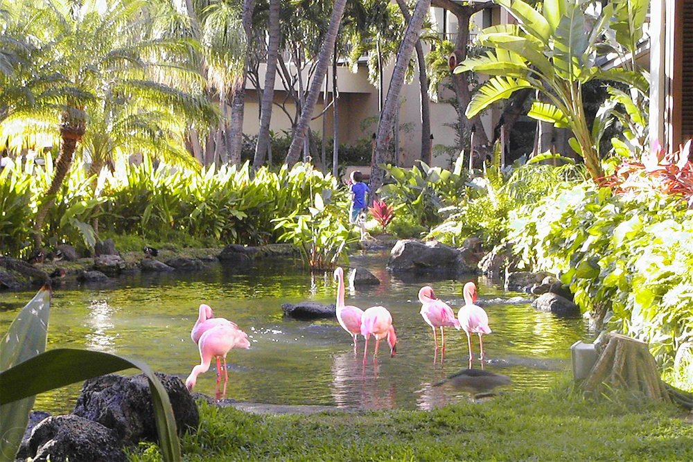 hawaii-waikiki-character-32-c32-travel-flamingos-hilton