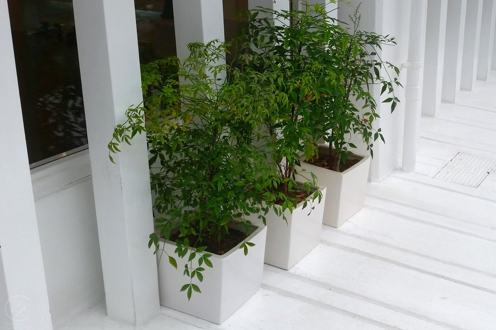 tokyo-plants-green-on-white-creating-spaces-character-32-c32-japan-diy-decor