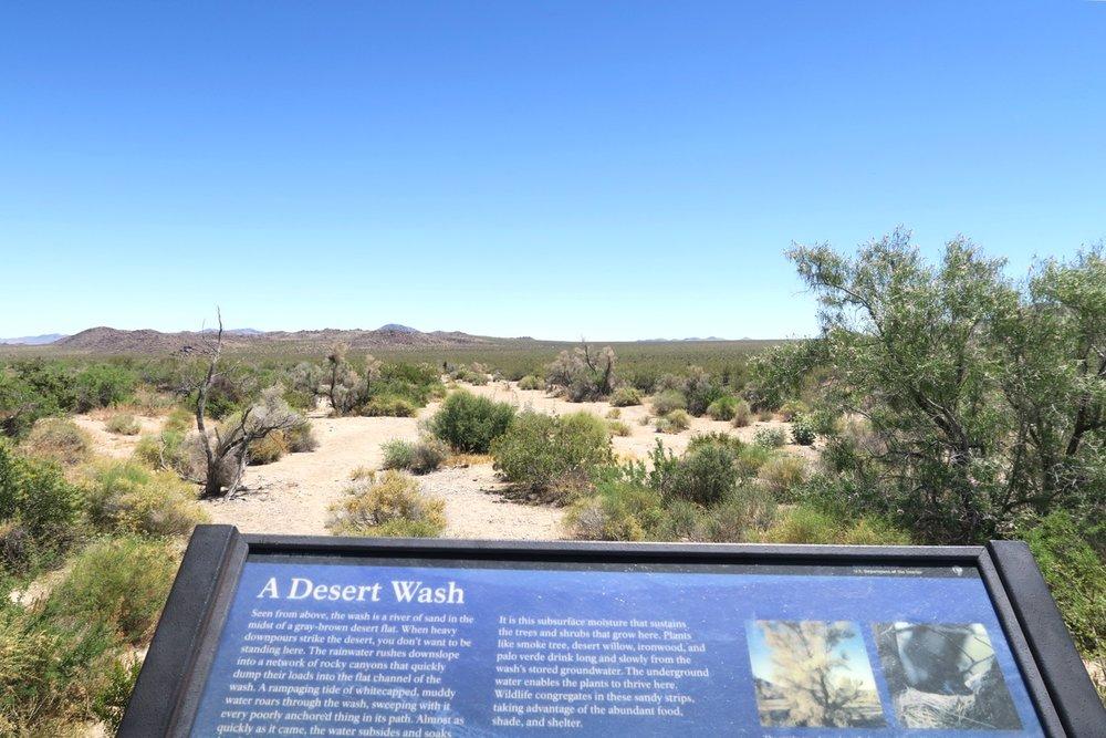 joshua-tree-desert-california-character-32-c32-travel-america-usa-a-desert-wash
