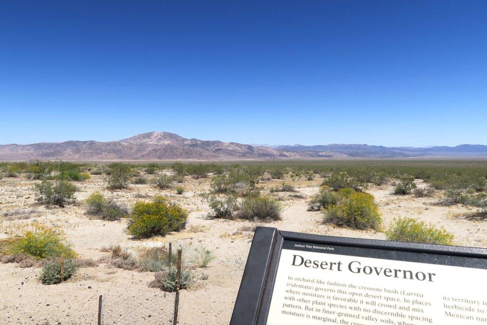 joshua-tree-desert-california-character-32-c32-travel-america-usa-desert-governor