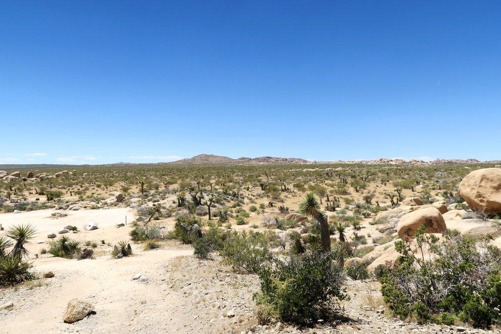 joshua-tree-desert-california-character-32-c32-travel-america-usa