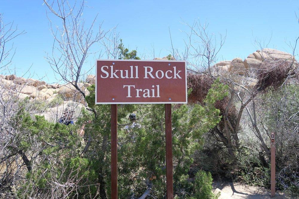 joshua-tree-desert-california-character-32-c32-travel-america-usa-skull-rock