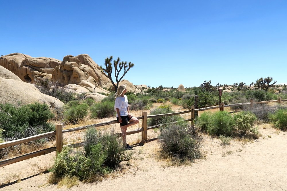 What You'll See at Joshua Tree National Park in California
