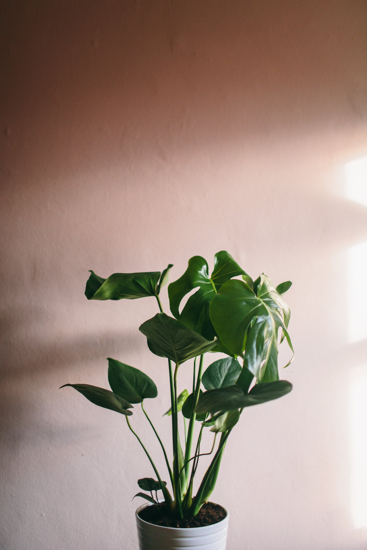 Botanica Studios-13.jpg