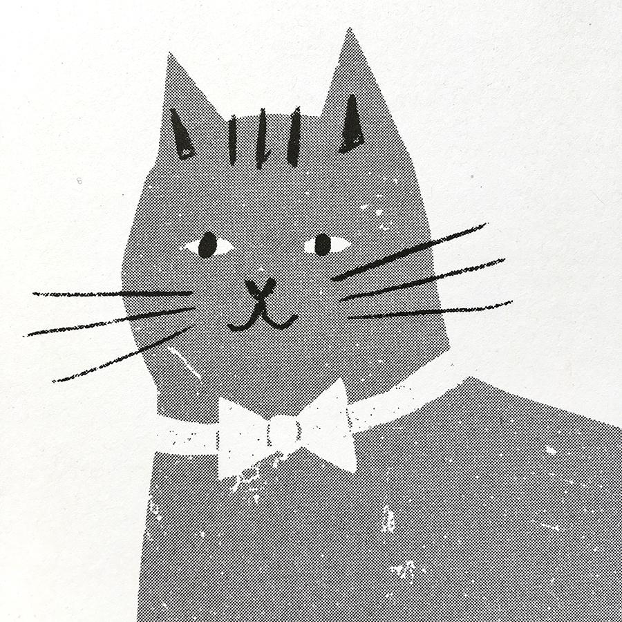 cat_close__62722.1525191953.jpg