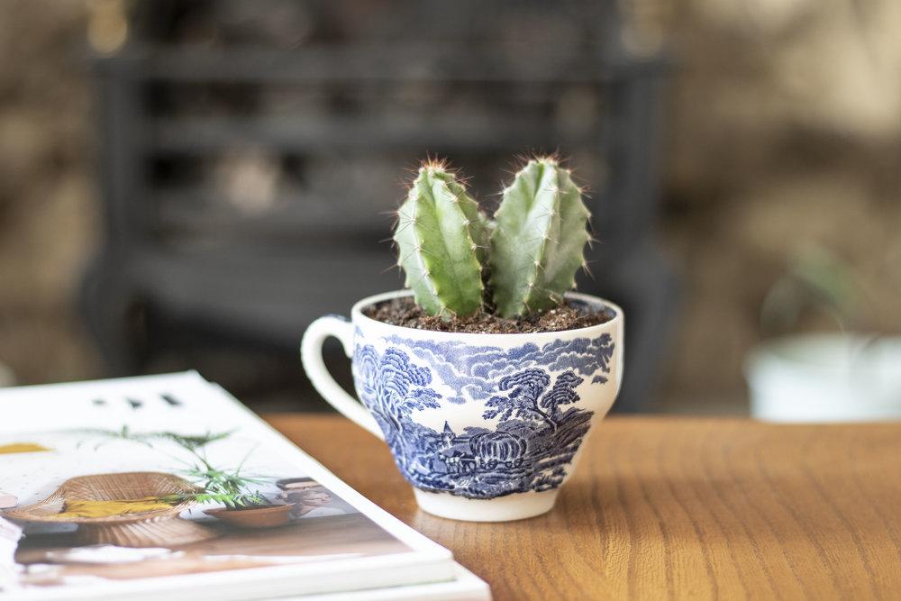 Teacup Planters.jpg