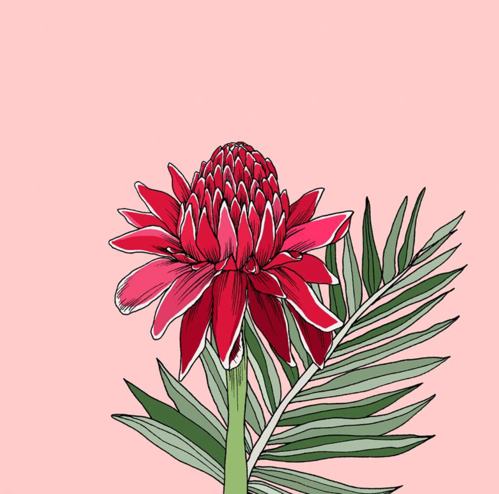 World Botanica - Hawaii - Torch Ginger.png