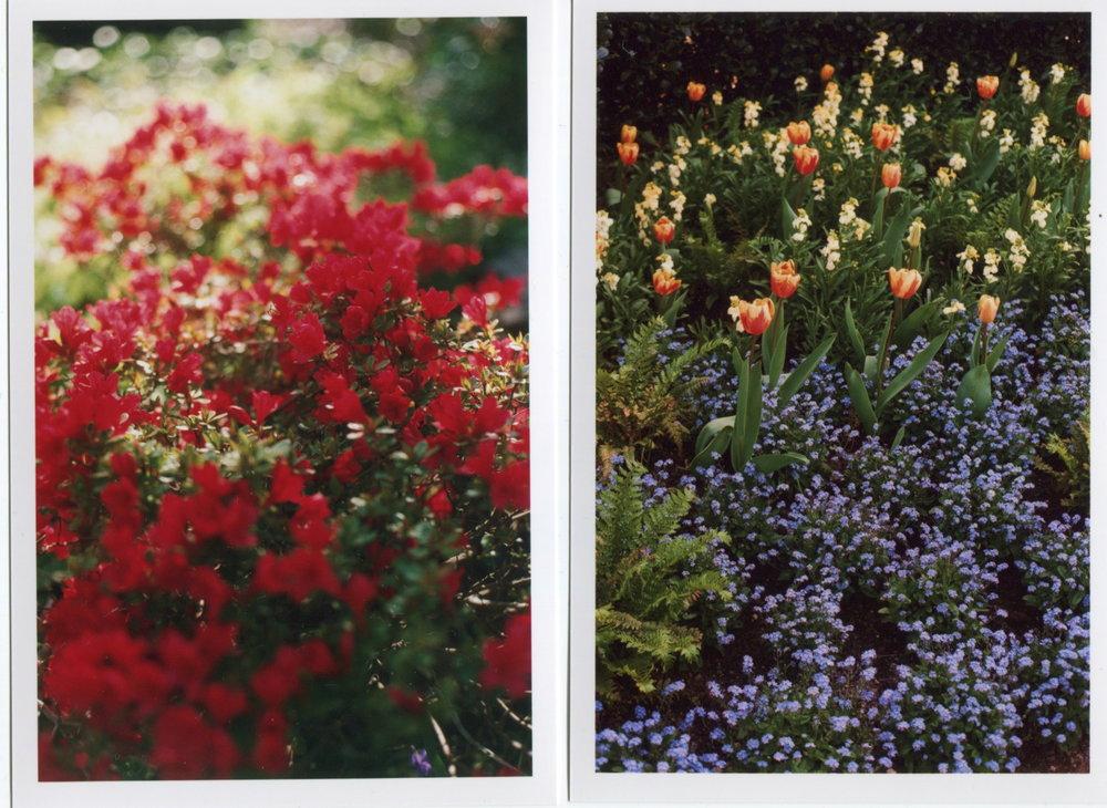Flowers shot on film.jpeg