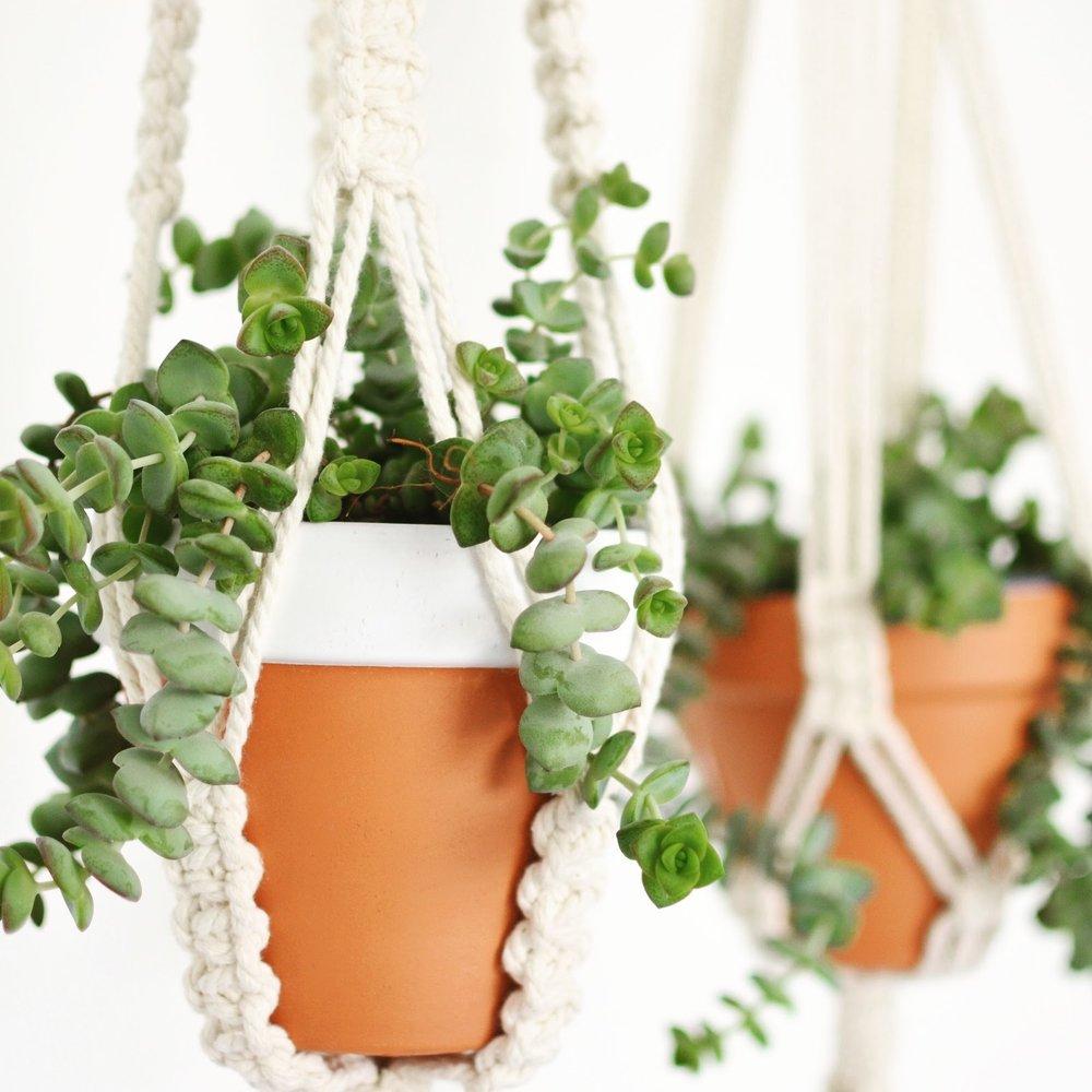 Macrame Hangers.jpg