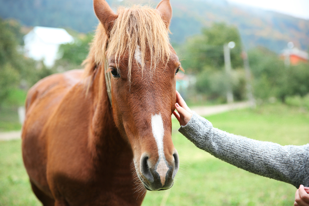 EALC Horse with Hands.jpg