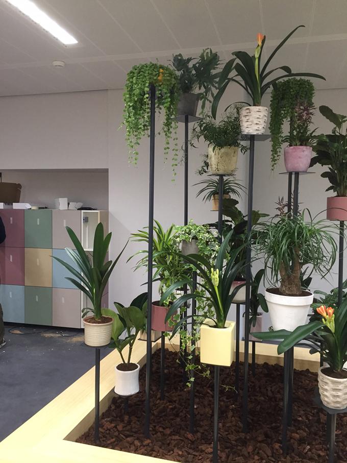 planten_kantoor_installatie_groene_wand.jpg