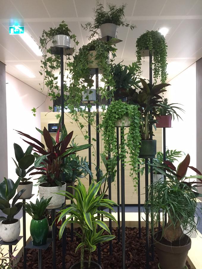 planten_kantoortuin_groene_wand