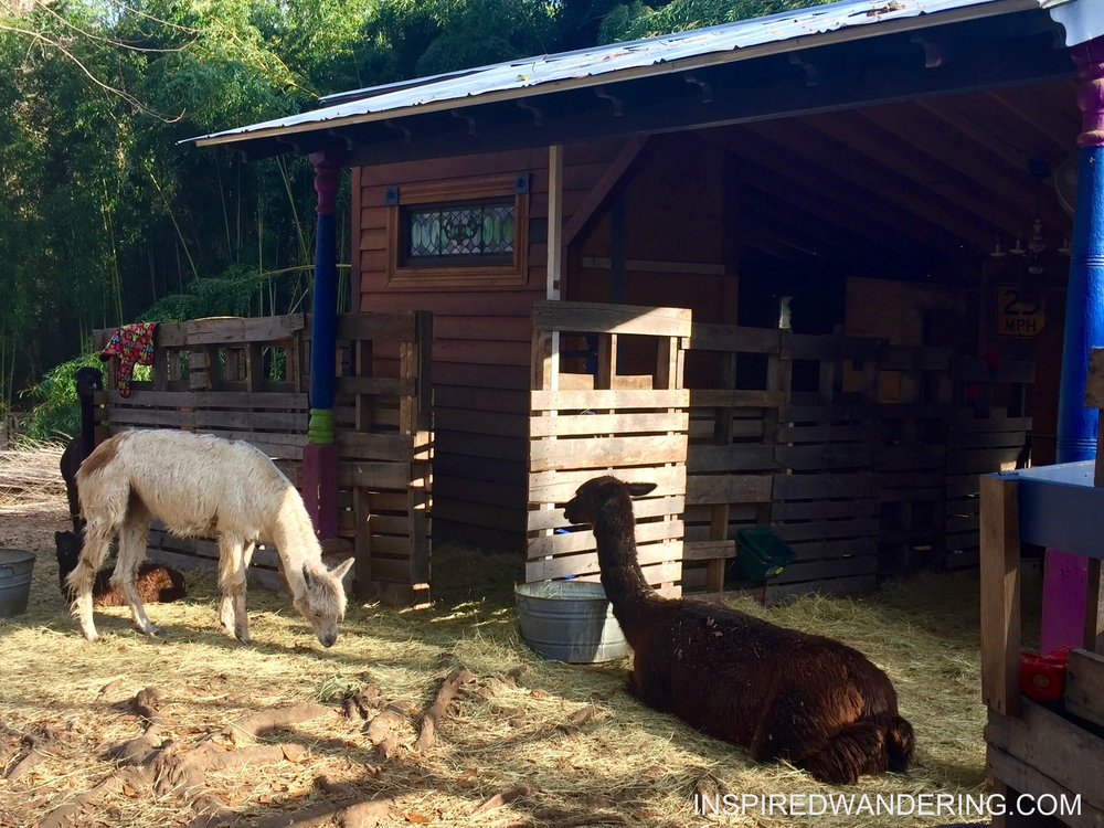Alpacas and Treehouses in Atlanta on Airbnb