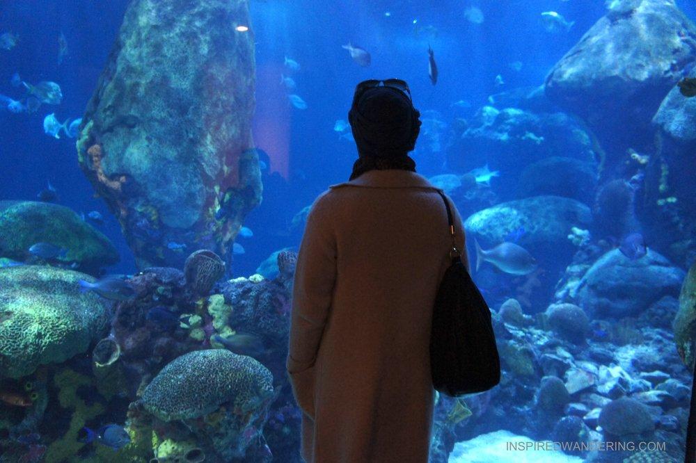 Tennessee Aquarium, Chattanooga, TN