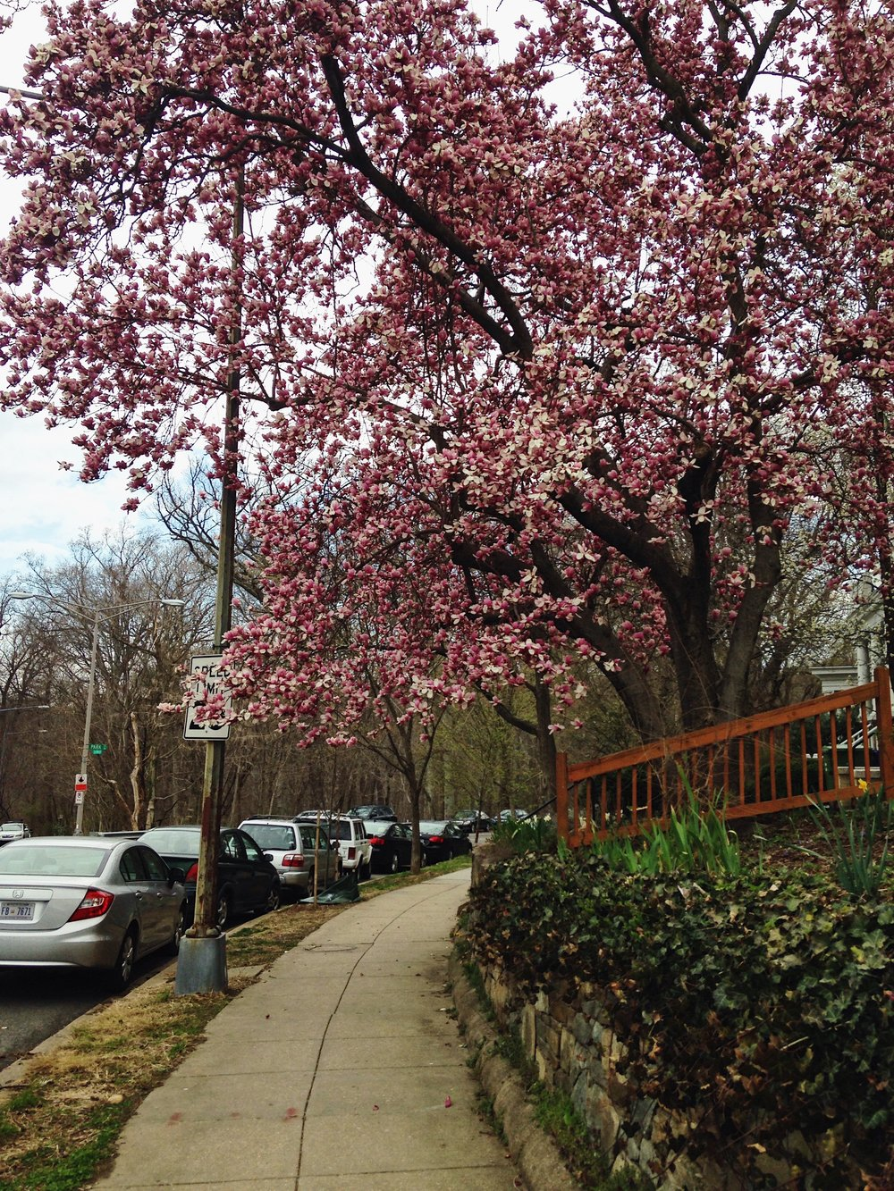 Spring comes to D.C. © E.A. Crunden