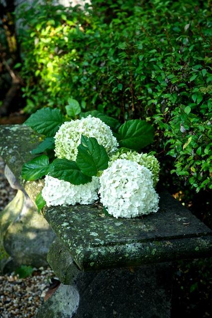 Hydrangeas on bench.jpg