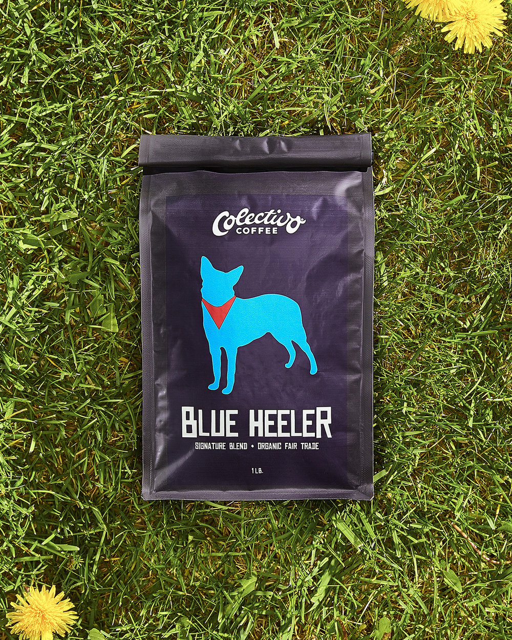 Blue_Heeler_1600p.jpg