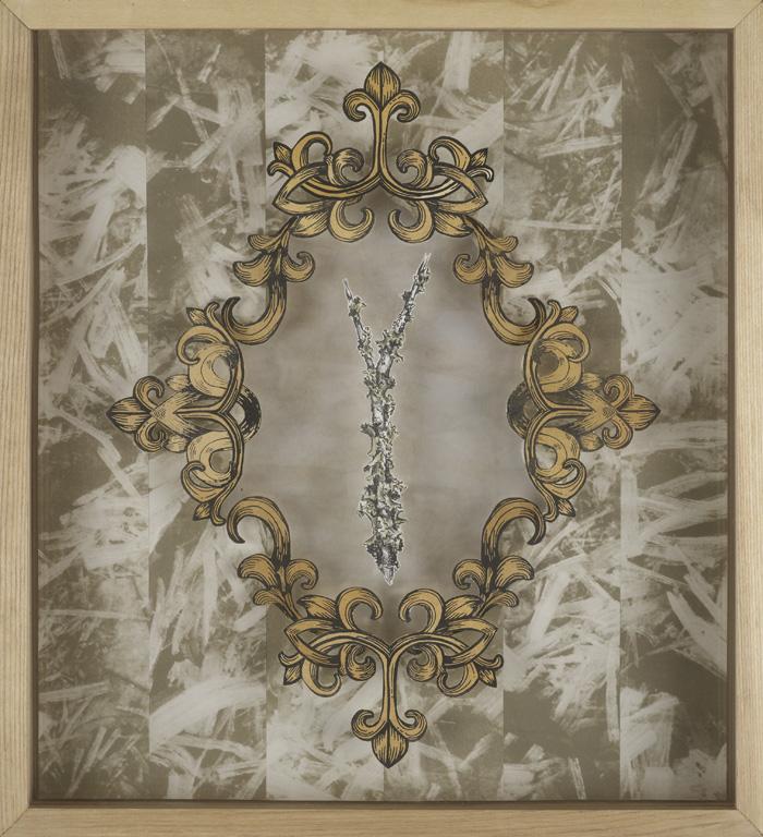 Perforated Ruffle Lichen (Parmotrema perforatum)