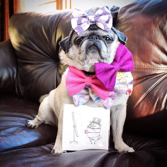There ain't no Tuesday like a bow tie Tuesday because a bow tied Tuesday got sass. 🎀#bowtietuesday  You like my ties!? You can get them at @tuesdaysties! Like my Inkpug print!? Snag one at @inkpug!