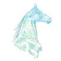 horse-head_03.jpg