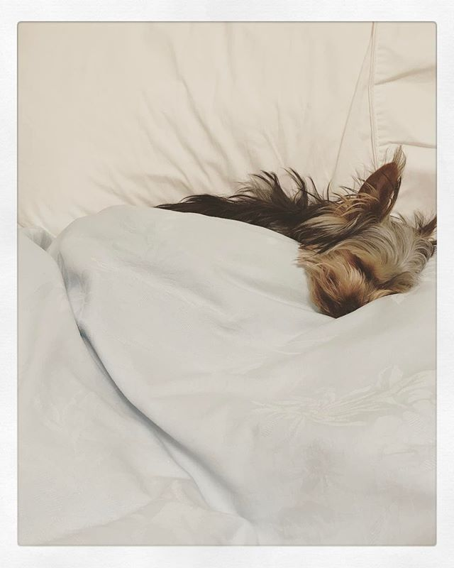 Some days you just want to stay in bed!