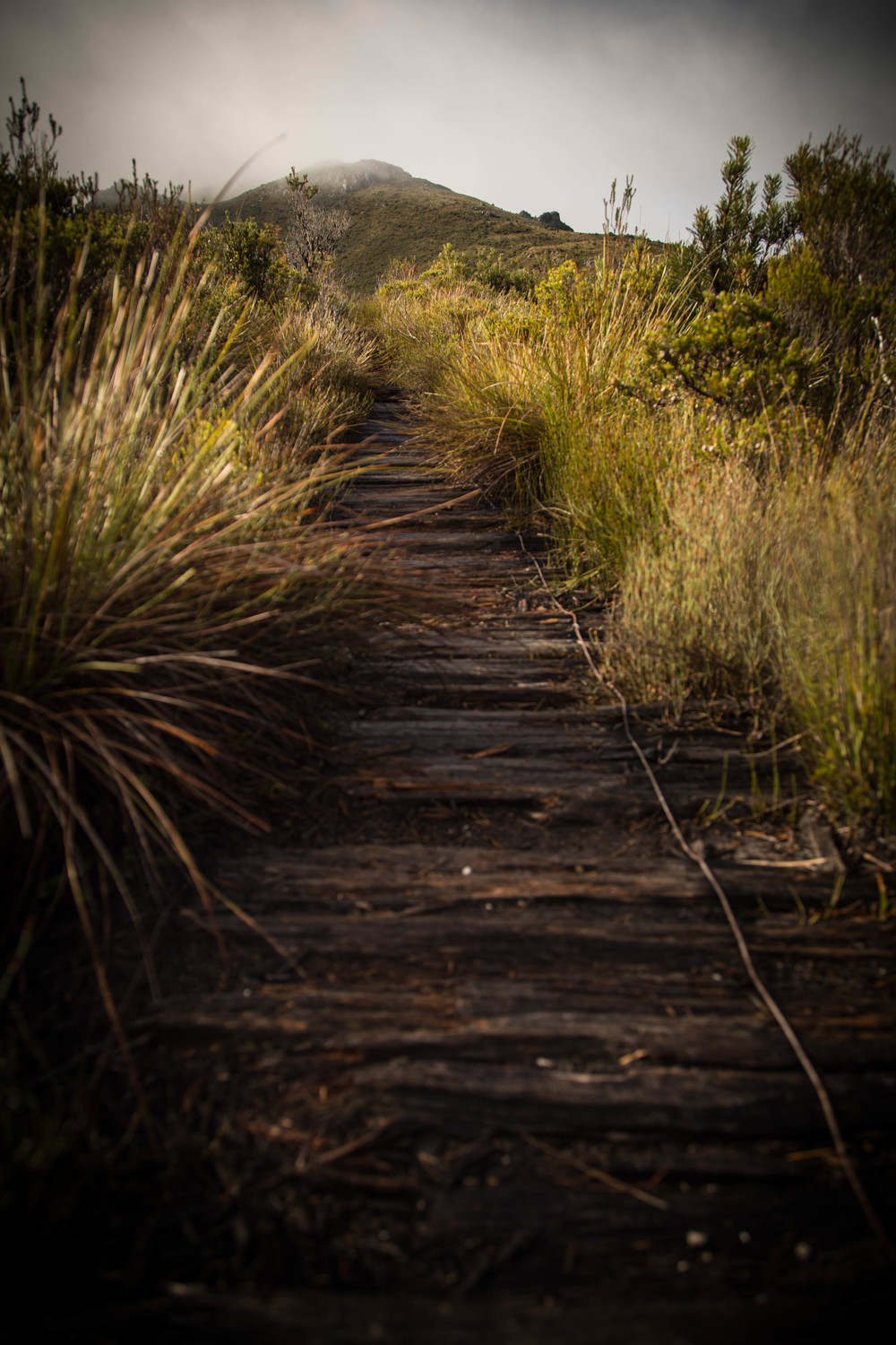 Wild Pedder - The Path to Mount Eliza