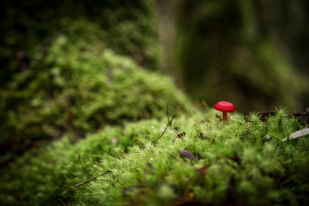 Wild Pedder - Fungi, Moss & Lichen within the Florentine Valley